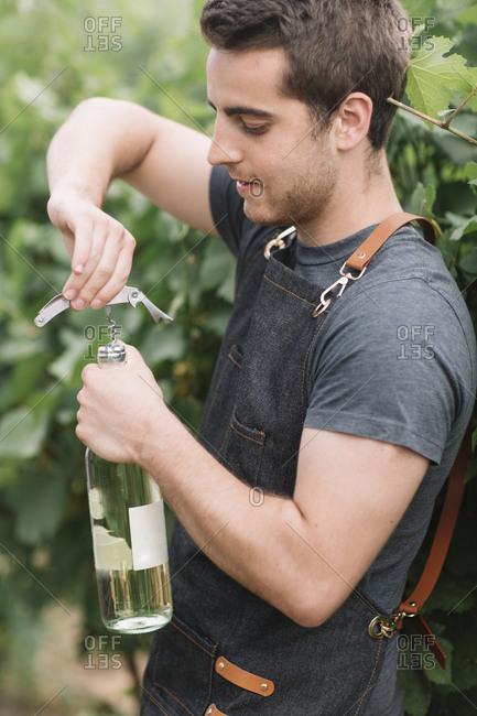 Sommelier opening wine bottle in the vineyard