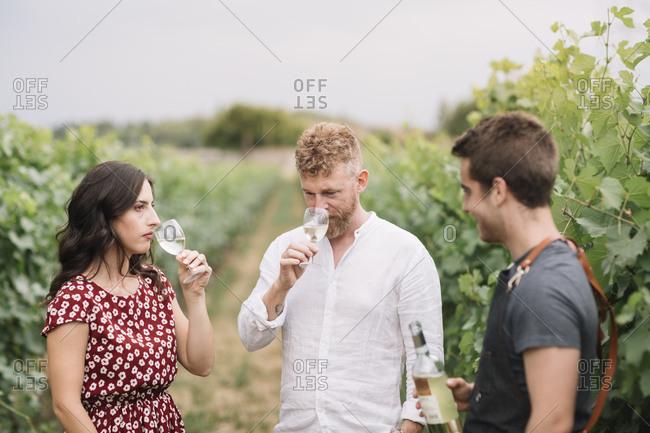 Sommelier explaining customers wine in the vineyard