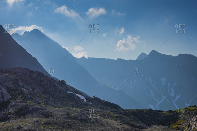 Germany- Bavaria- Allgaeu- Allgaeu Alps- Alpine ibex