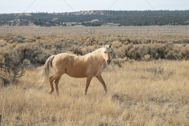 Golden colored horse in northwest New Mexico