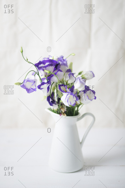 White and violet lisianthus flowers in a white pitcher