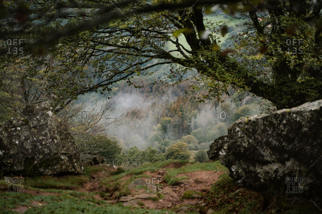 Fog rolling through the forest of Basque Country during autumn