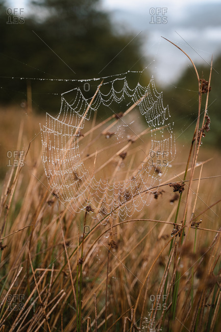 Morning dew trapped on a spider net