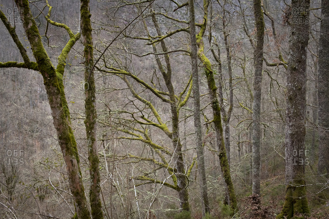 Forest of Muniellos Natural Reserve, Asturias, Spain