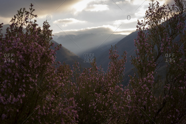 Afternoon light over the mountains surrounding Muniellos Nature Reserve in Spain