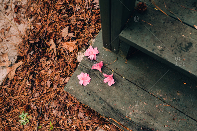 Pink flowers on wooden steps of a dock