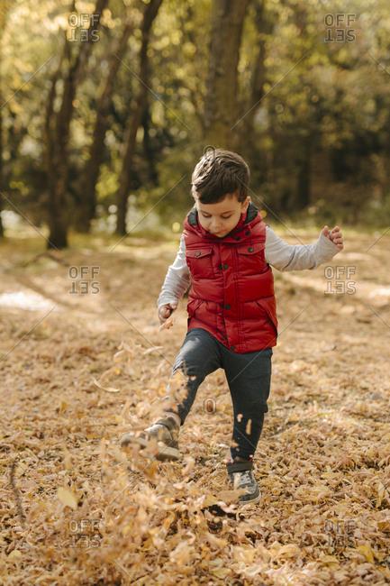 Boy kicks a heap of autumn leaves