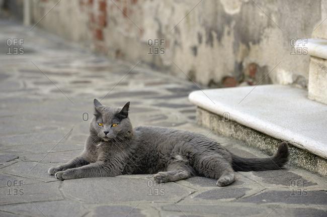 eine graue Katze liegt auf dem Boden