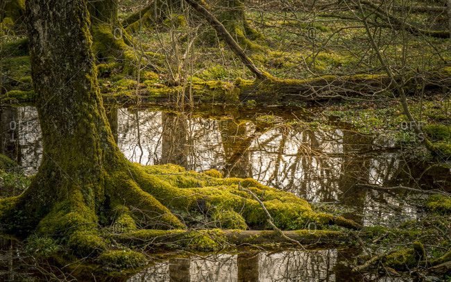 Moor mit Bumen und einem See