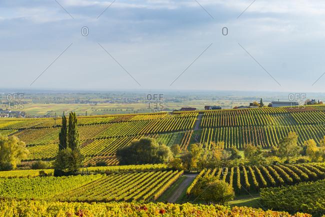 Deutschland, Rheinlandpfalz, Blick von der Villa Ludwigshhe nach Sden ber Weinberge