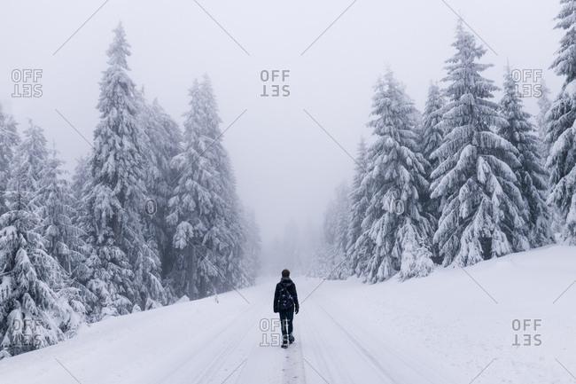 Winterwanderung am Morgen im Harz, Torfhaus, Deutschland