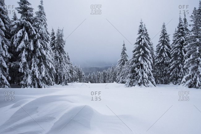 View from the Magdeburger Htte, Harz, Torfhaus, Germany