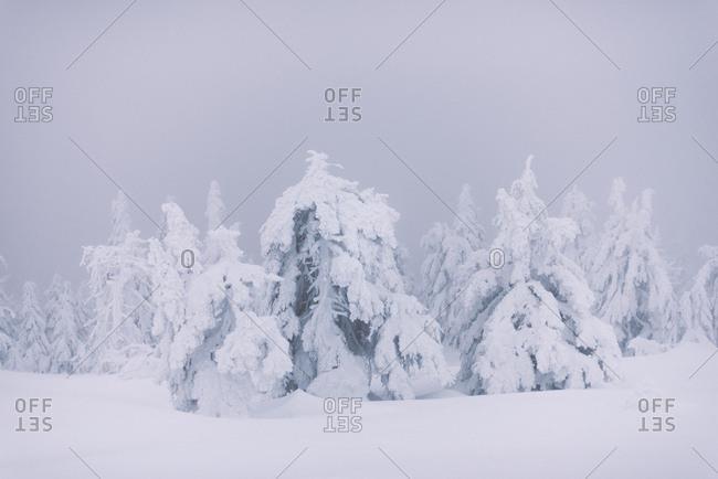 Baumskulpturen, Brocken, Harz, Schierke, Deutschland