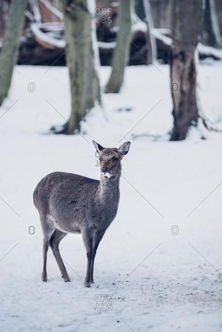 Reh im Wildpark, Harz, Wernigerode, Deutschland