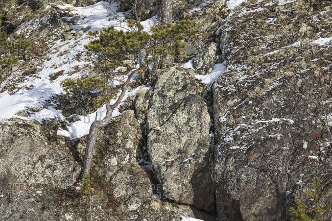 Finnland, einzelne Kiefer auf Felsen im Winter