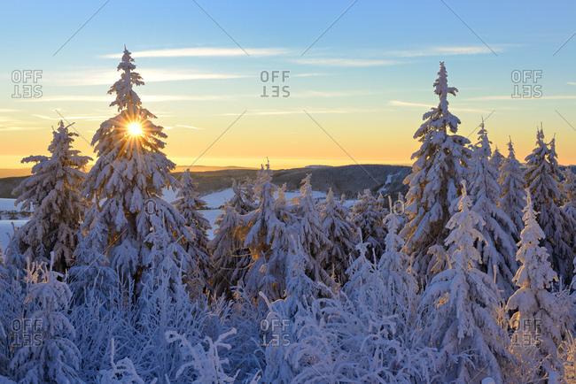 Deutschland, Sachsen, Erzgebirge, Oberwiesenthal, Sonnenaufgang am Fichtelberg, Fichten mit Schnee bedeckt, Winterlandschaft