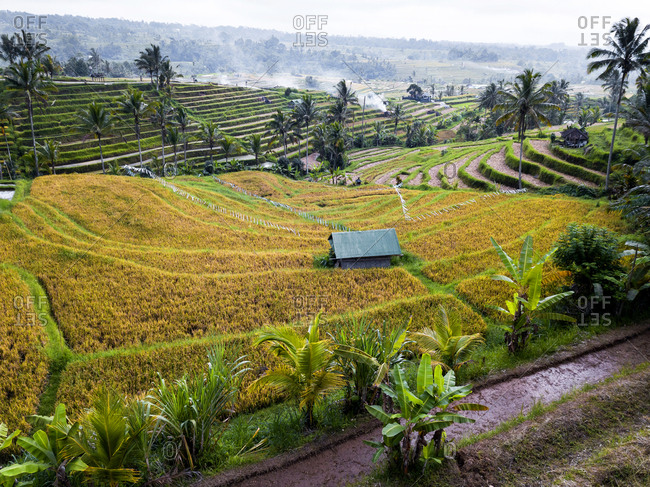 Aerial View Of Rice Terraces In Bali, Indonesia