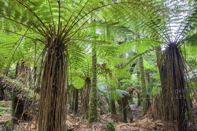 Beautiful tropical rain forest landscape