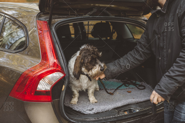 Man stroking dog in car boot