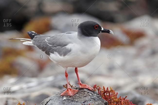 Seabird on rock