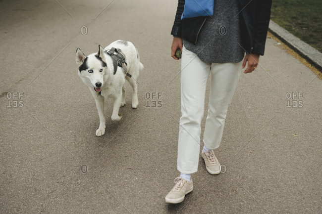 Walking dog enjoying its life
