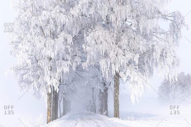 Winter trees along road