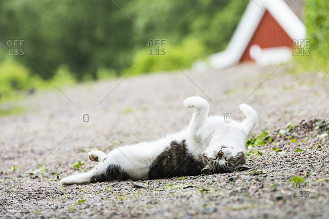 Sleeping cat on a carpet