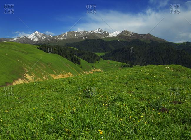 Xinjiang ili Joan kush grassland