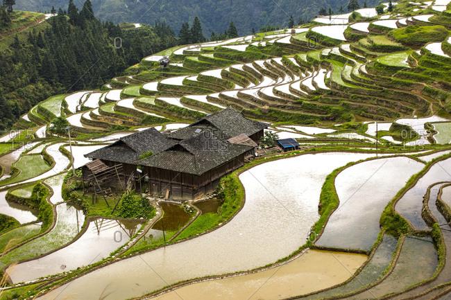 Guizhou province congjiang list terraces