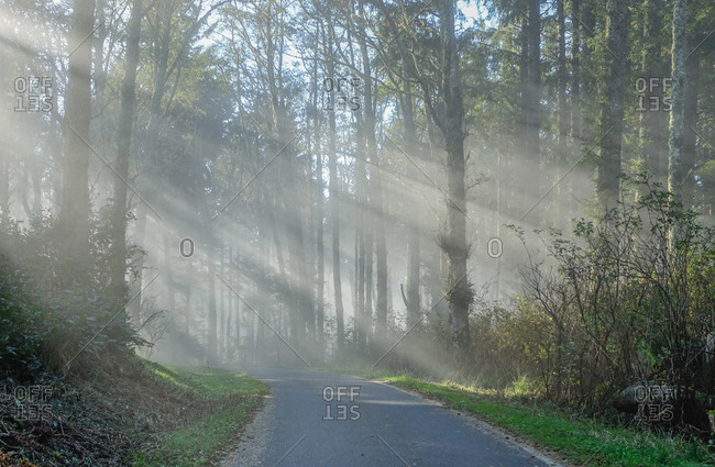 Rays of light through forest highway