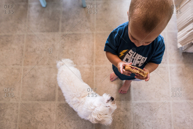 toddler boy holding sandwich in kitchen while small dog looks at him