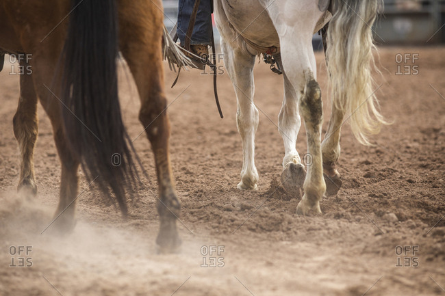 Horses kick up dust in the ring at the Arizona black rodeo