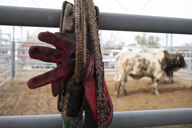 A bull rider's glove and rope hangs near a bull at the AZ black rodeo