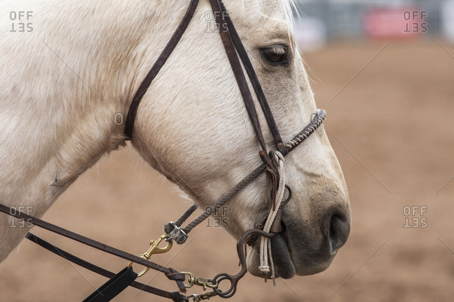 Detail shot of a horses profile at the Arizona Black Rodeo