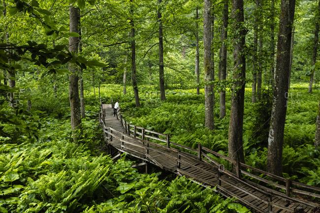 Bridge in the fern