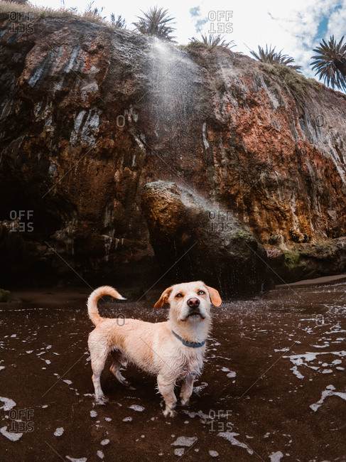 Dog on the beach under a waterfall