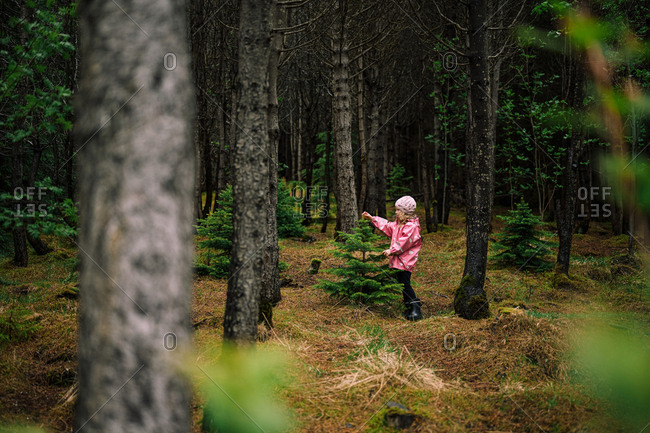 Adorable girl near little spruce in Icelandic forest