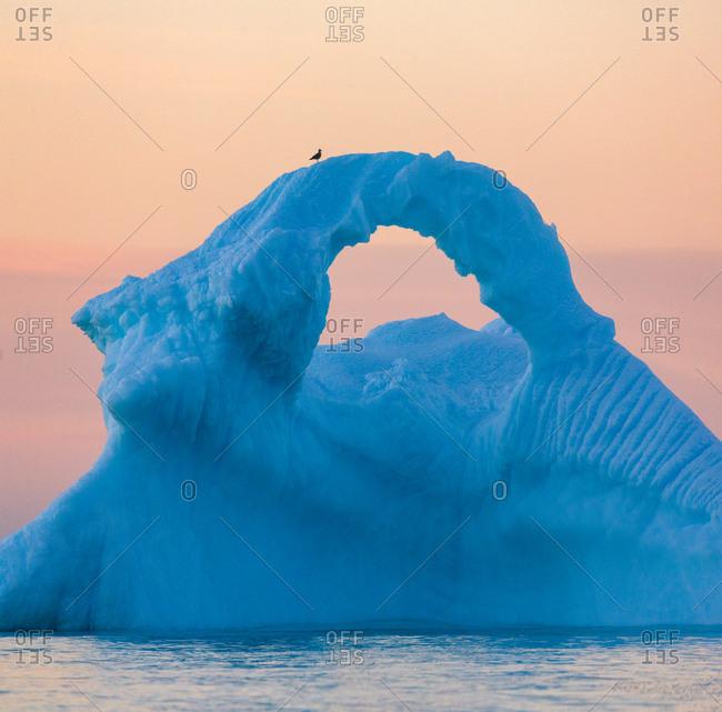 Lone bird on iceberg at sunset