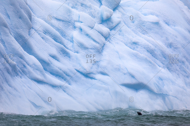 Crabeater seals and Icebergs