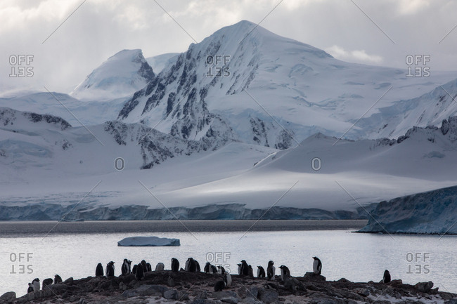 Gentoo Penguin colony in front of snowy peaks
