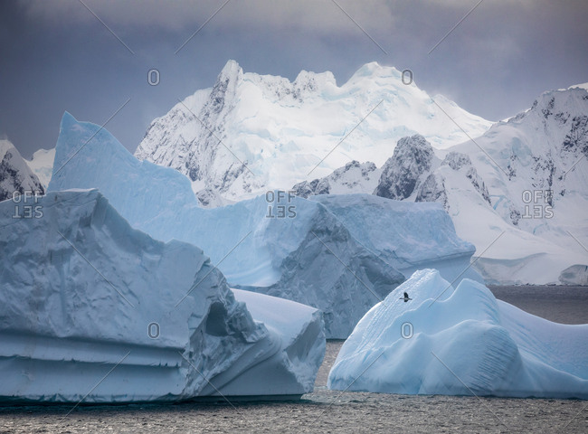 Icebergs and snowy mountains