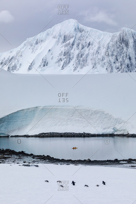 Gentoo Penguins and kayakers in front of snowy peaks