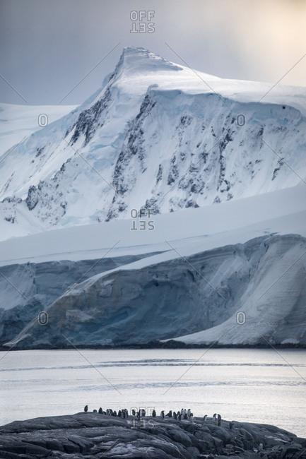 Gentoo penguins and snowy peaks