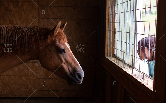 Girl looking at her horse through barn window