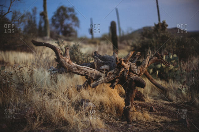 Dead Wood from the Offset Collection