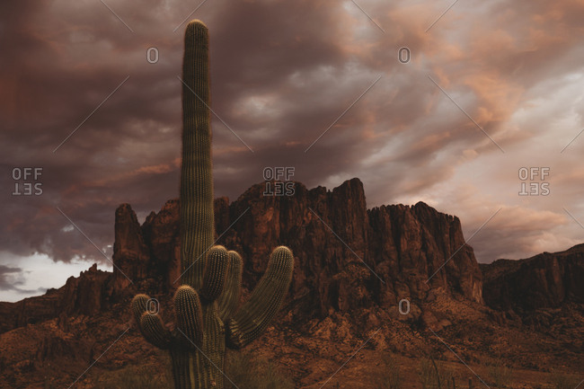 Cactus and the sky - Offset