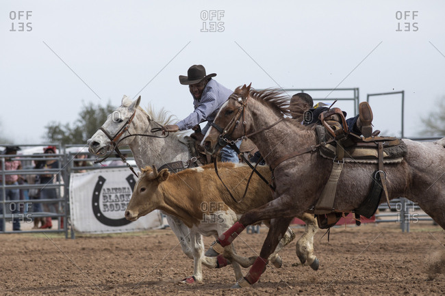 United States, Arizona, Chandler - March 9, 2019: A roping even tat the Arizona Black Rodeo