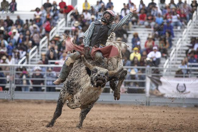United States, Arizona, Chandler - March 9, 2019: A bull rider tries to hold on during the rodeo bull riding event