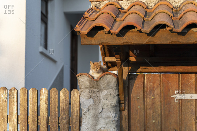 Cat lying on a rustic wall
