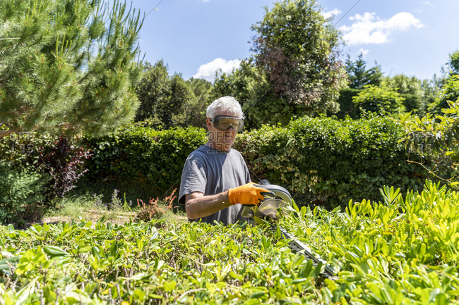 Senior man pruning hedge with trimmer